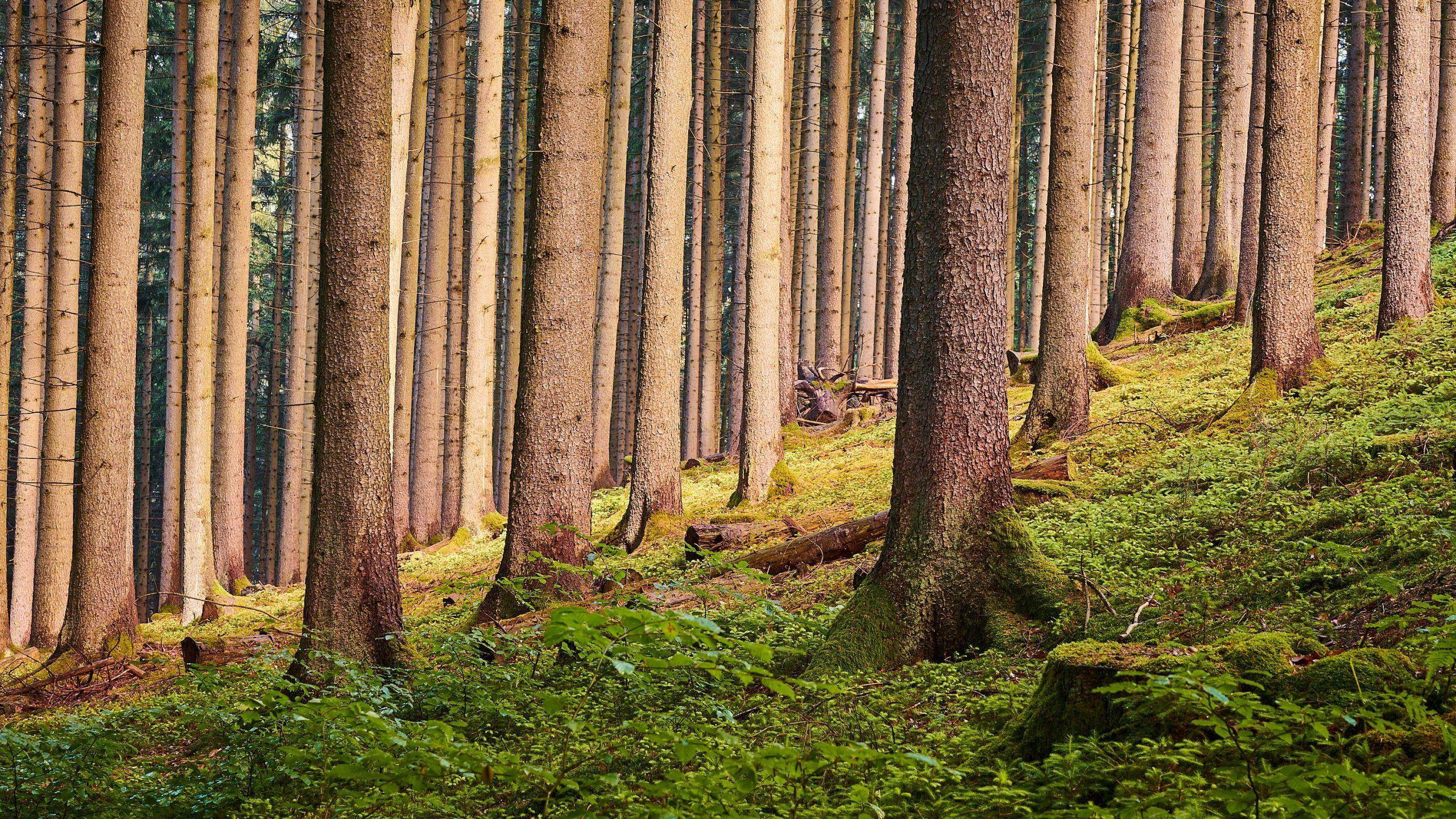 Toro Tree Preservation Service