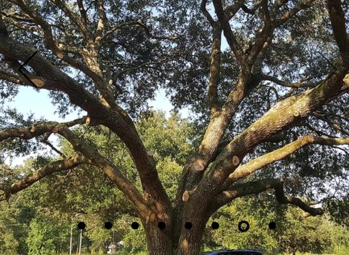 Tree Pruned in Baton Rouge