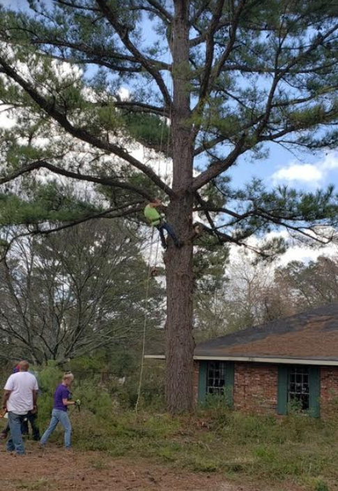 Trimming tree branches in Baton Rouge