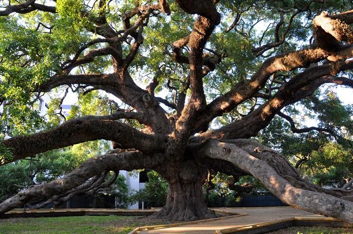 tree arborist baton rouge